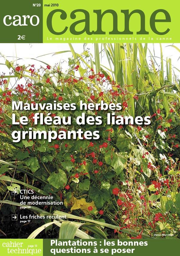 CaroCanne N°20 : Mauvaises herbes, le fléau des lianes grimpantes