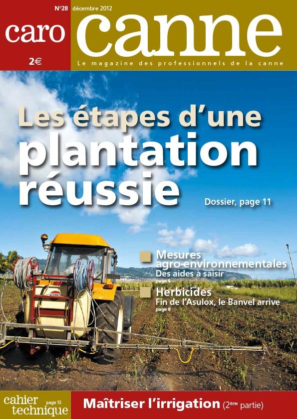 CaroCanne N°28 : Les étapes d'une plantation réussie