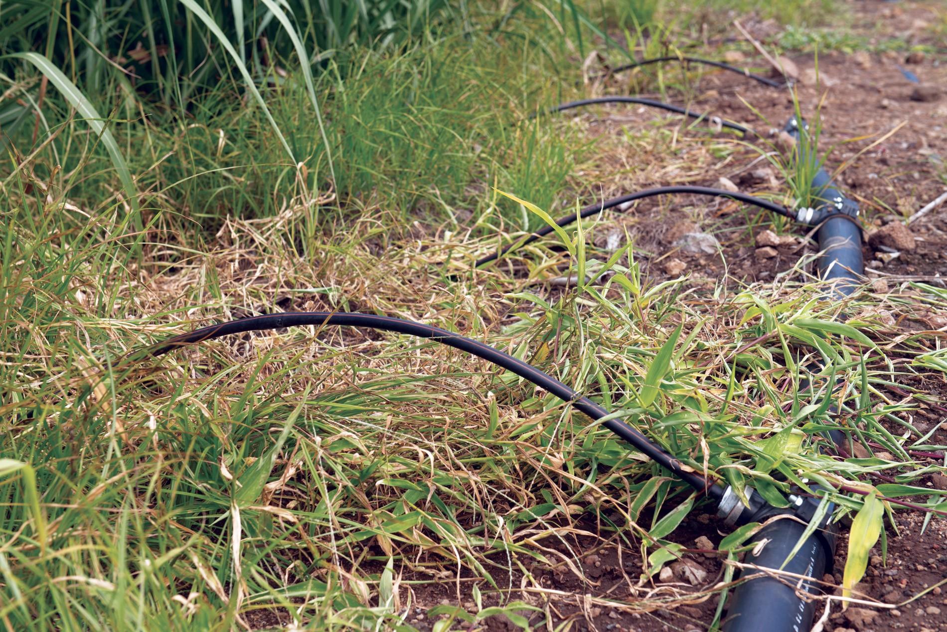 Investir dans l'irrigation  : quel coût, quel gain?
