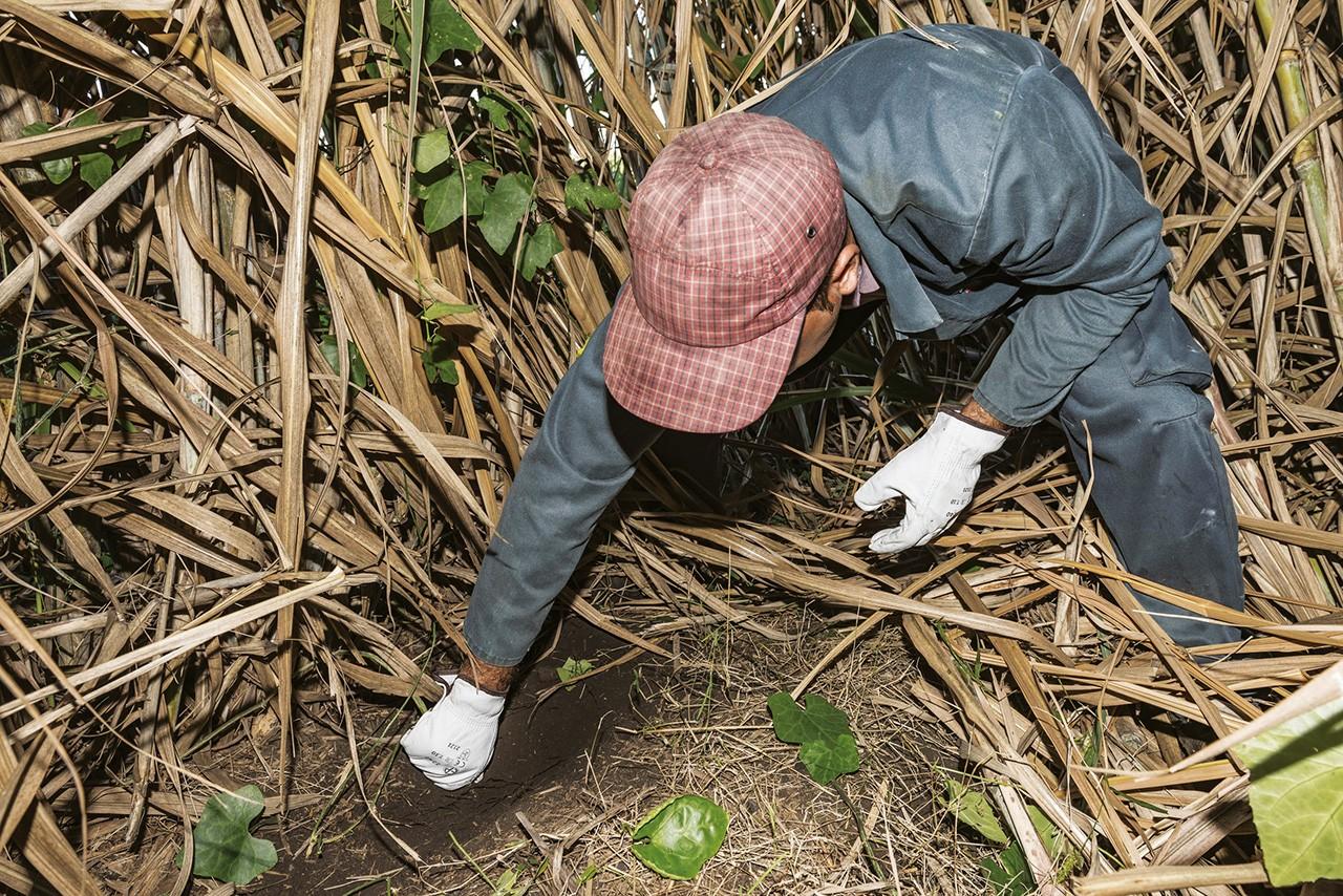Lutte herbicide : quelles alternatives au Roundup et au Basta?