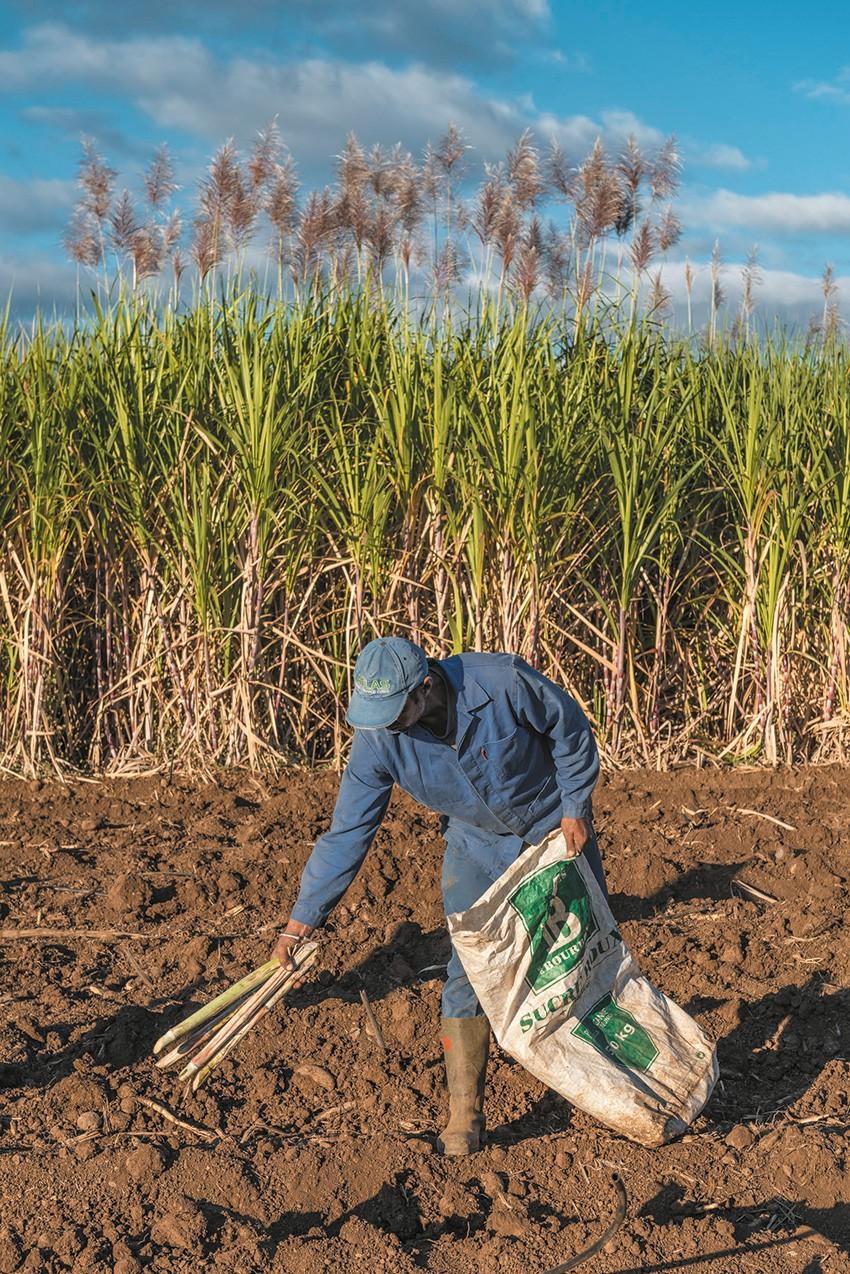 Nouvelle aide à la plantation : un montant forfaitaire de 3442,50€/ha