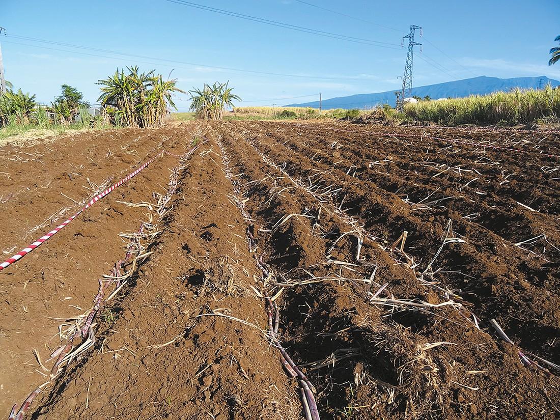 Plantation : un effort à accentuer