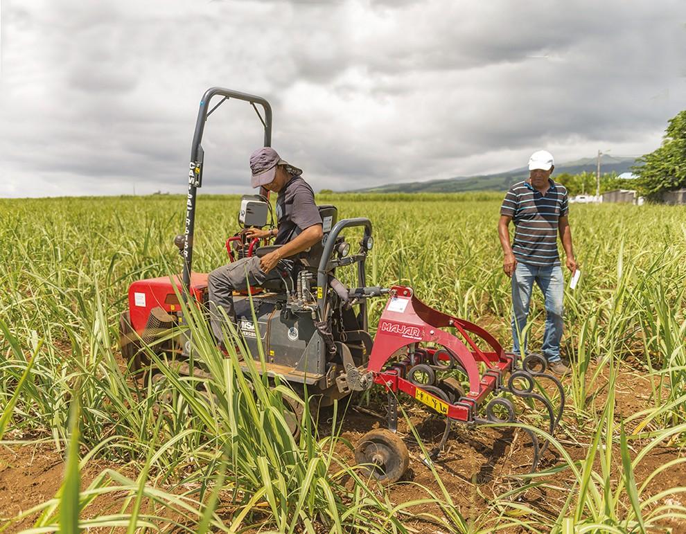 Réduction des herbicides: les nouveaux itinéraires techniques