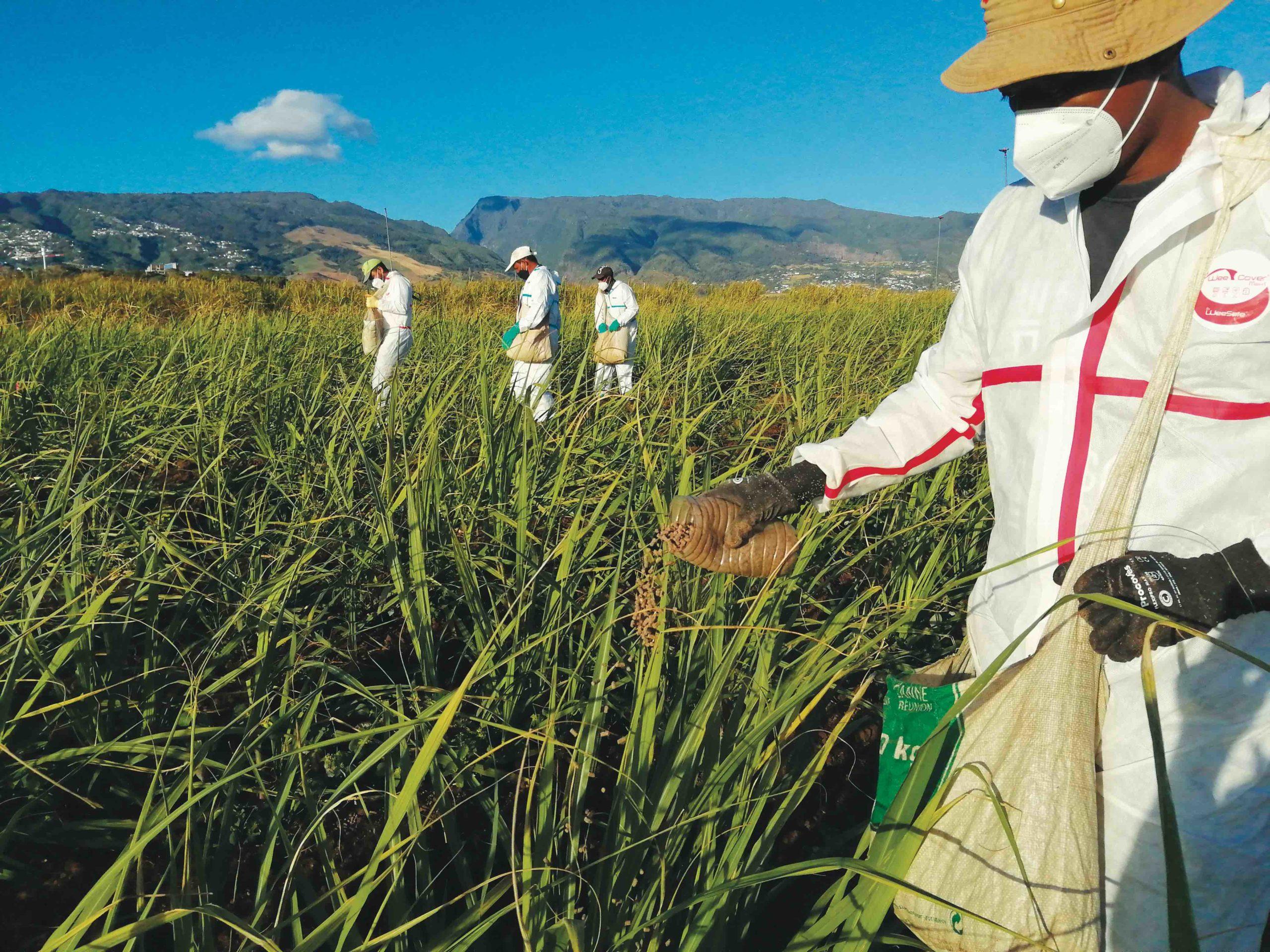 Azote : Des déperditions qui coûtent cher