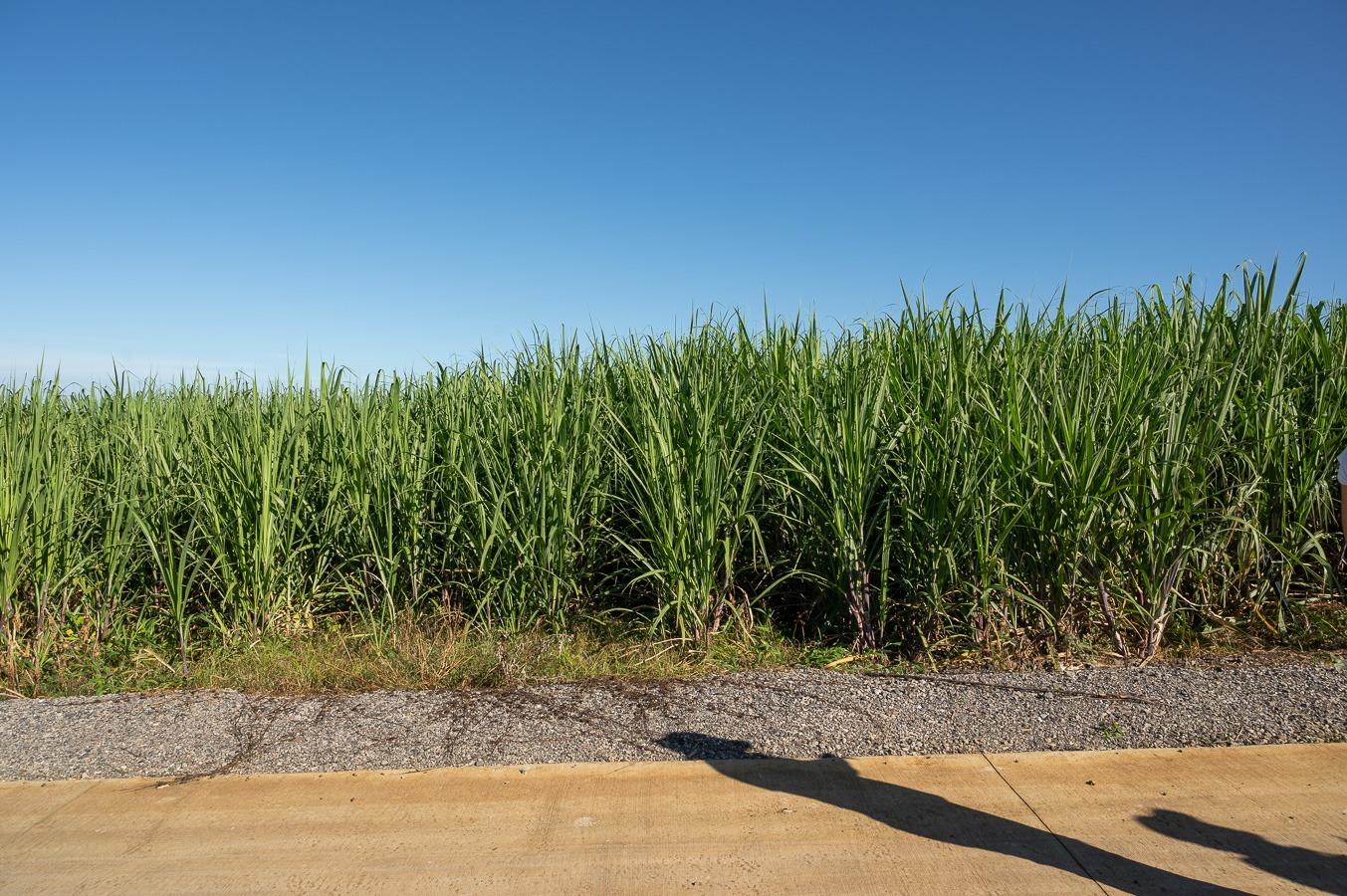 Villèle : l'intérêt de l'irrigation par l'exemple, Parcelles de démonstration